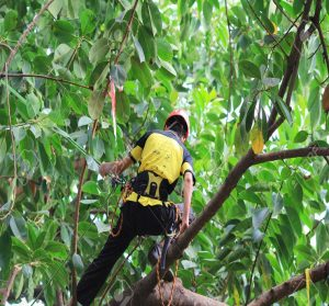 a man conducting a tree survey